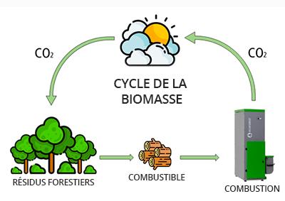 cycle-de-la-biomasse